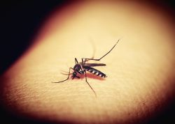 How to Make Homemade Mosquito Repellent That Actually Works!